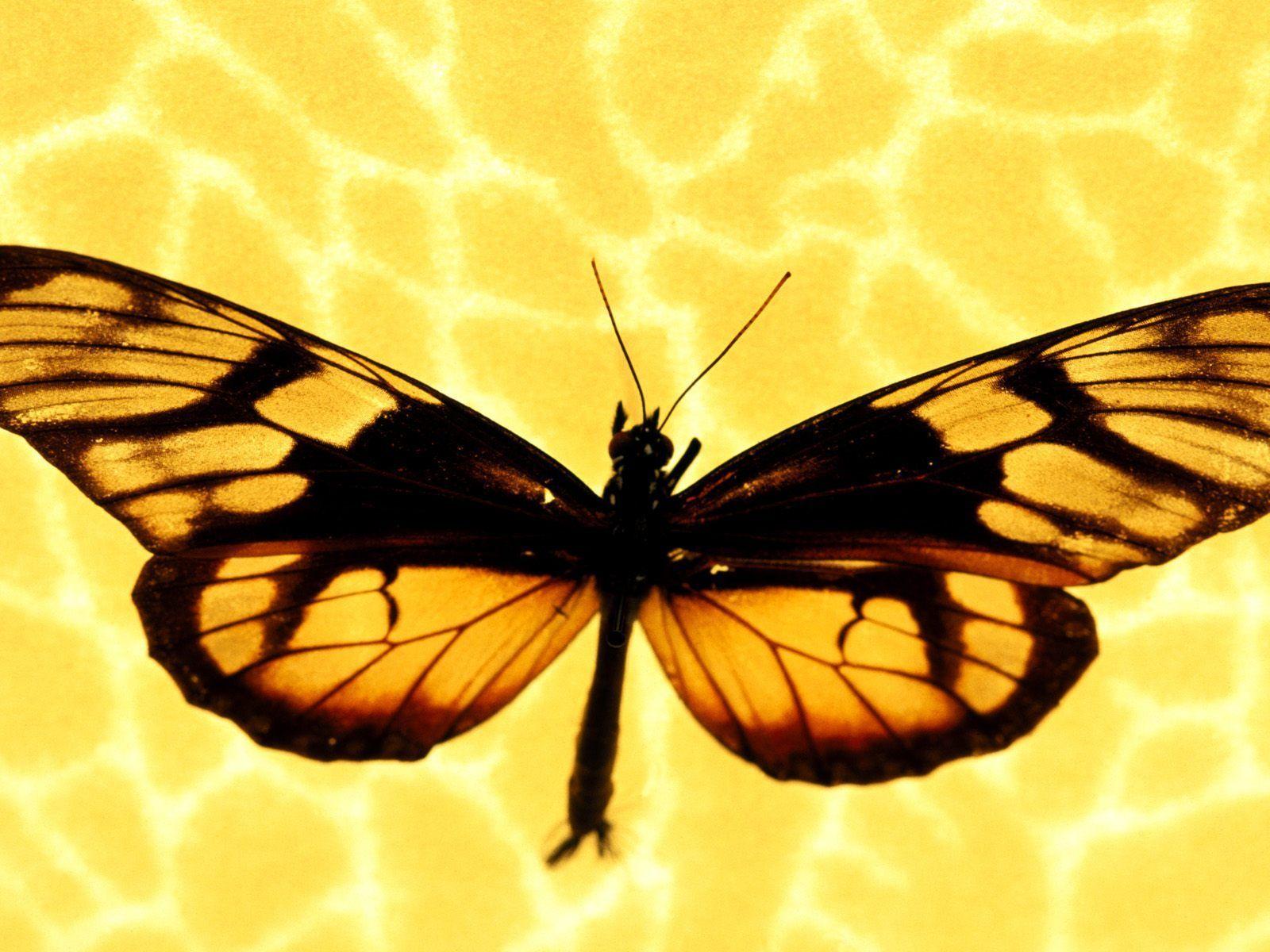 fonds d ecran oiseaux insectes et papillons. Black Bedroom Furniture Sets. Home Design Ideas