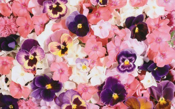 fonds d ecran fleurs - Page 5