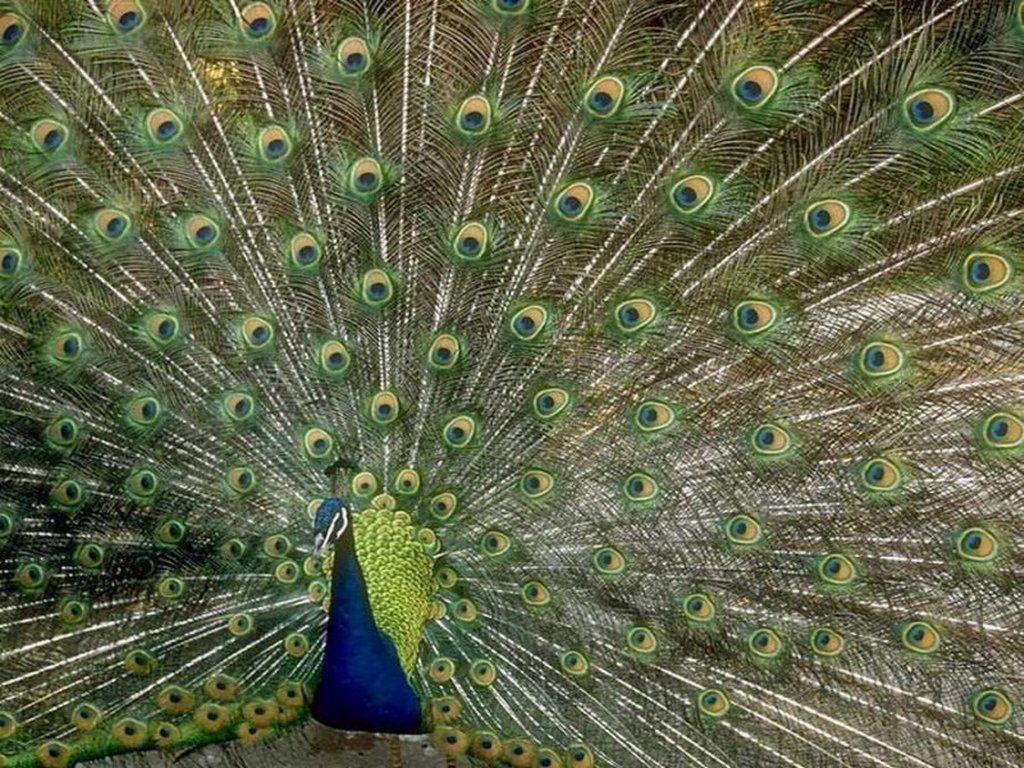 Fonds d ecran oiseaux et papillons centerblog for Google jardin
